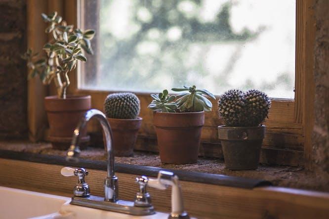 cactus in keuken zetten
