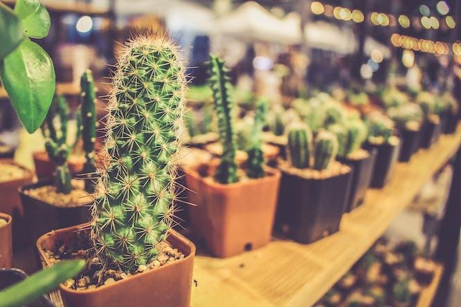 mini cactus online kopen