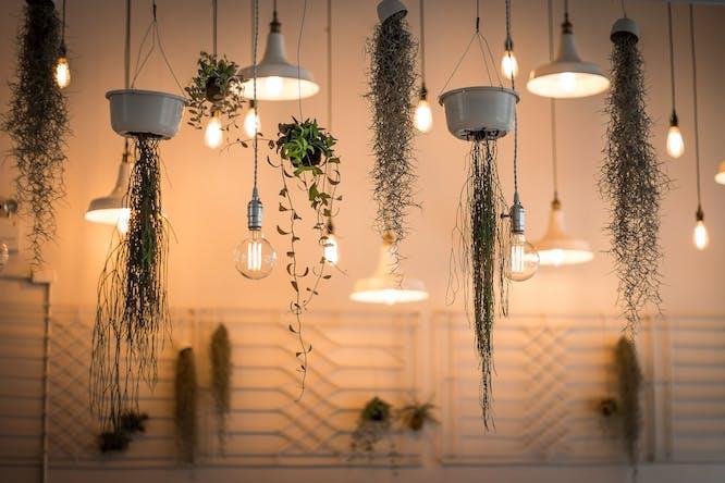 planten aan plafond hangen