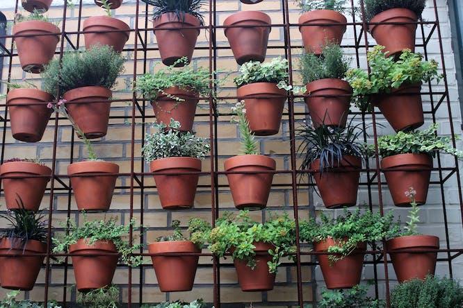 planten verticaal hangen